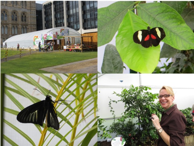 butterfly exhib