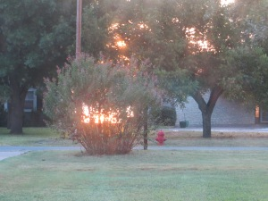 The colors were so vibrant it looks like the bush in our front yard is on fire.